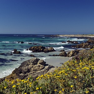 image of beach with rocks and yellow flowers