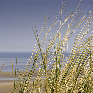 tall grass wtih ocean in the background