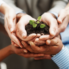 A group of hands cupped together holding a growing plant